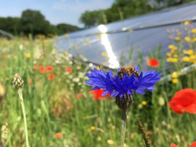 Solartehrmie Freilandanlagen bieten Raum für eine vielfältige Flora und Fauna. Foto: Solites