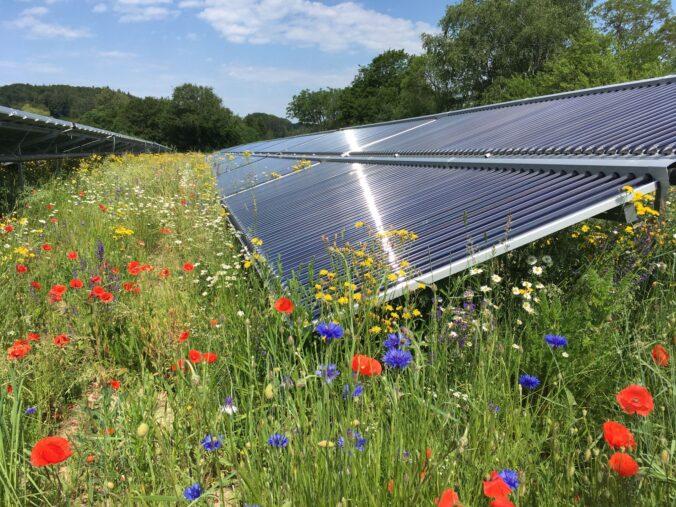 Zu sehen sind Blumen vor einer solaren Freiflächenanlage.